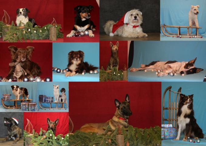 Hundesportverein Badem e.V.
